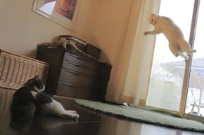 Leaping Kitty Has No Time for Cat Naps