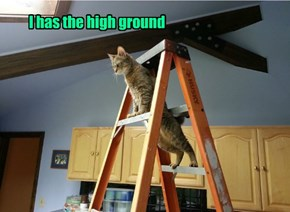 Just a few more steps up and I will be the Ceiling Cat