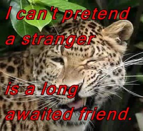 I can't pretend a stranger  is a long awaited friend.