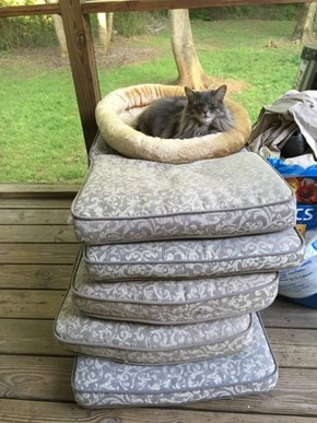 The Princess Cat and The Pea
