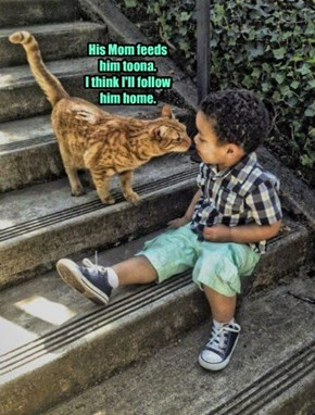 His Mom feeds him toona.  I think I'll follow him home.