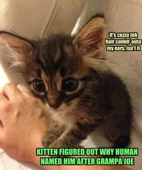 KITTEN FIGURED OUT WHY HUMAN NAMED HIM AFTER GRAMPA JOE