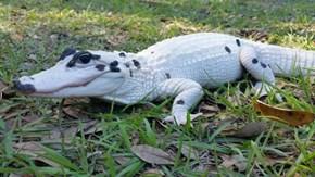 Pet me, I'm a Dalmatian!