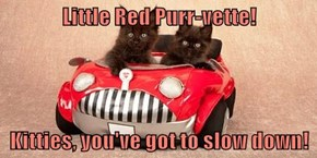 Little Red Purr-vette!  Kitties, you've got to slow down!