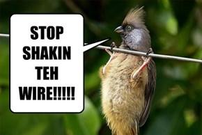 STOP SHAKIN TEH WIRE!!!!!