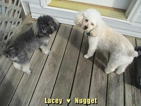 Lacey   ♥   Nugget