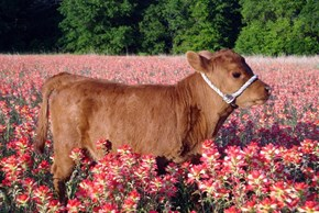 Mooove Over Winter, Spring is Here!