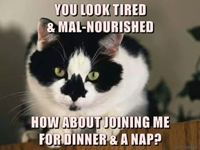 YOU LOOK TIRED                                                                & MAL-NOURISHED  HOW ABOUT JOINING ME                          FOR DINNER & A NAP?