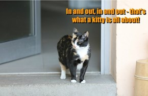 In and out, in and out - that's what a kitty is all about!