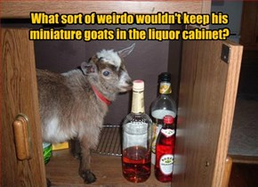 What sort of weirdo wouldn't keep his miniature goats in the liquor cabinet?