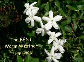 The BEST  Warm Weather Fragrance