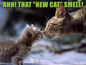 """AHH! THAT """"NEW CAT"""" SMELL!"""