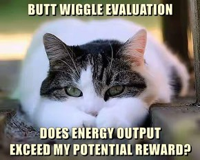 BUTT WIGGLE EVALUATION  DOES ENERGY OUTPUT                              EXCEED MY POTENTIAL REWARD?
