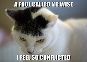 A FOOL CALLED ME WISE  I FEEL SO CONFLICTED