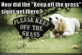 """How did the """"Keep off the grass"""" signs get there?"""