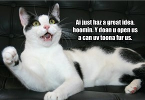Kitteh's great idea