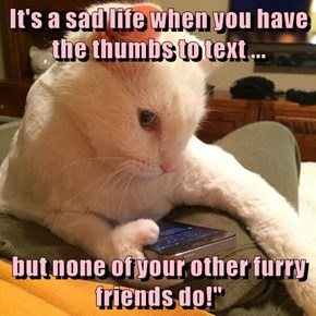 It's a sad life when you have the thumbs to text ...  but none of your other furry friends do!""