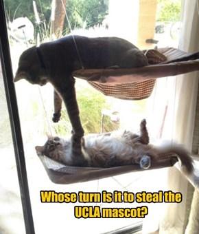 Dorm Cats