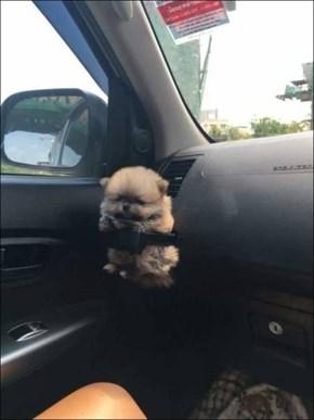 Pup Holder
