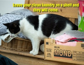 Leave your clean laundry on a shelf and they will come.
