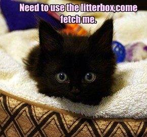 Need to use the litterbox,come fetch me.