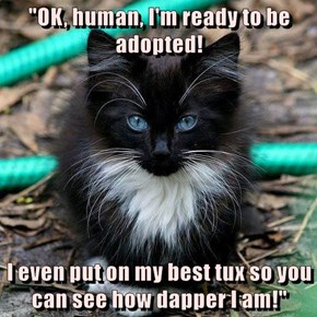 """""""OK, human, I'm ready to be adopted!  I even put on my best tux so you can see how dapper I am!"""""""