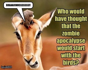 Who would have thought that the zombie apocalypse would start with the birds?