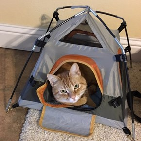 What Is This? A Tent for Cats!?