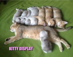 KITTY DISPLAY