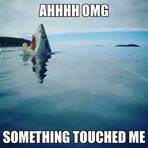 What If It Was a Shark!!