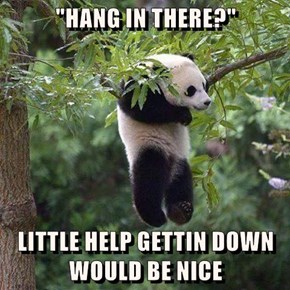 """""""HANG IN THERE?""""  LITTLE HELP GETTIN DOWN WOULD BE NICE"""
