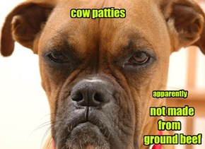 cow patties                                               not made                                             from                                      ground beef