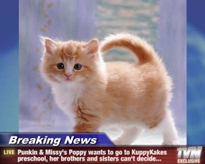 Breaking News - Punkin & Missy's Poppy wants to go to KuppyKakes preschool, her brothers and sisters can't decide...