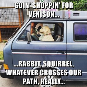 GOIN' SHOPPIN' FOR VENISON...  ...RABBIT, SQUIRREL, WHATEVER CROSSES OUR PATH, REALLY...