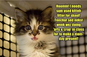 The Funny Things Little Kits Say!