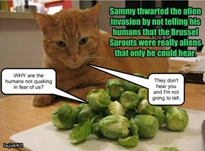 Sammy thwarted the alien invasion by not telling his humans that the Brussel Sprouts were really aliens that only he could hear.
