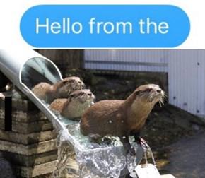 Hello, It's Me