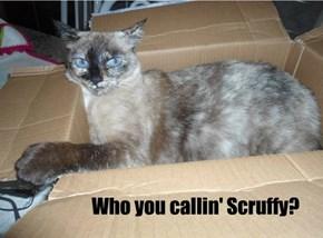 Who you callin' Scruffy?
