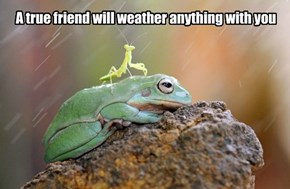 A true friend will weather anything with you