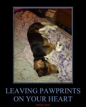 LEAVING PAWPRINTS ON YOUR HEART