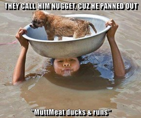 """THEY CALL  HIM NUGGET, CUZ HE PANNED OUT  """"MuttMeat ducks & runs"""""""
