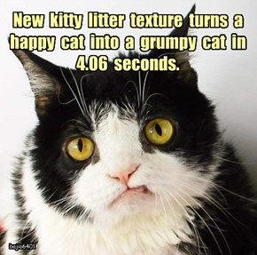 New  kitty  litter  texture  turns  a  happy  cat  into  a  grumpy  cat  in  4.06  seconds.