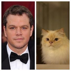 Meet Catt Damon, the Cat That Looks Just Like Matt Damon