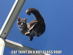 CAT TAINT ON A HOT GLASS ROOF