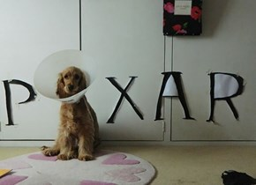 This Pup's Human Looks at the Cone of Shame a Little Differently Than Most