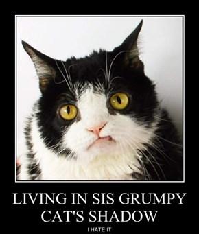 LIVING IN SIS GRUMPY CAT'S SHADOW