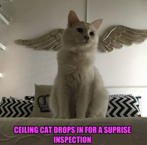 CEILING CAT DROPS IN FOR A SUPRISE INSPECTION