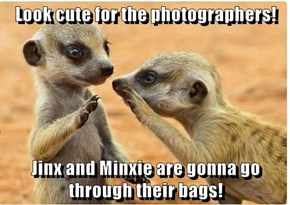 Look cute for the photographers!  Jinx and Minxie are gonna go through their bags!