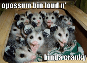 opossum bin loud n'  kinda cranky