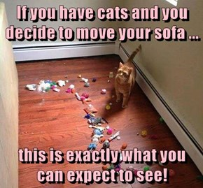 If you have cats and you decide to move your sofa ...  this is exactly what you can expect to see!